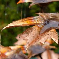 'Maple Leaf sculpture (Copper Water Features Fountain)' by Gary Pickles