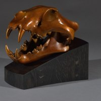 Asian Animals Reptiles Insects or Birds Sculpture or Statues by sculptor artist Simon Gudgeon titled: 'Tiger (Bronze Head/Trophy Skull sculpture)' in Bronze
